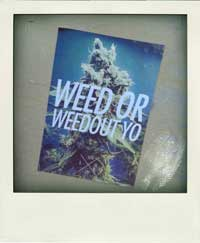 2014-weed-or-weedout-yo